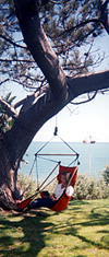 Island Chair hanging from Tree